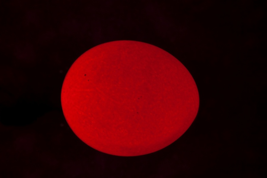 Uovo rosso